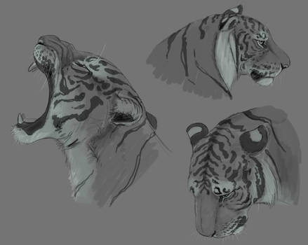 Just some Tiger headshots