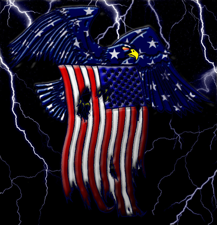12037 American Bald Eagle by wtsecraig on DeviantArt