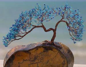 Blue Breeze Bonsai