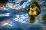 Little Duckie by NunoPires