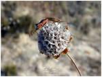 Bugs Making Love by NunoPires