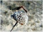 Bugs Making Love II by NunoPires