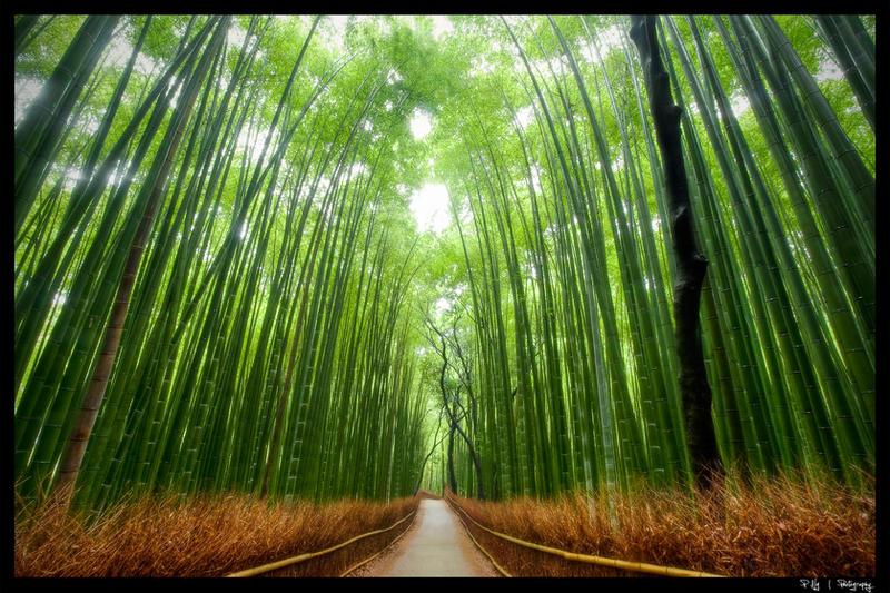 [组图] 绿树成荫花为径 看十大最美树隧道 - 路人@行者 - 路人@行者