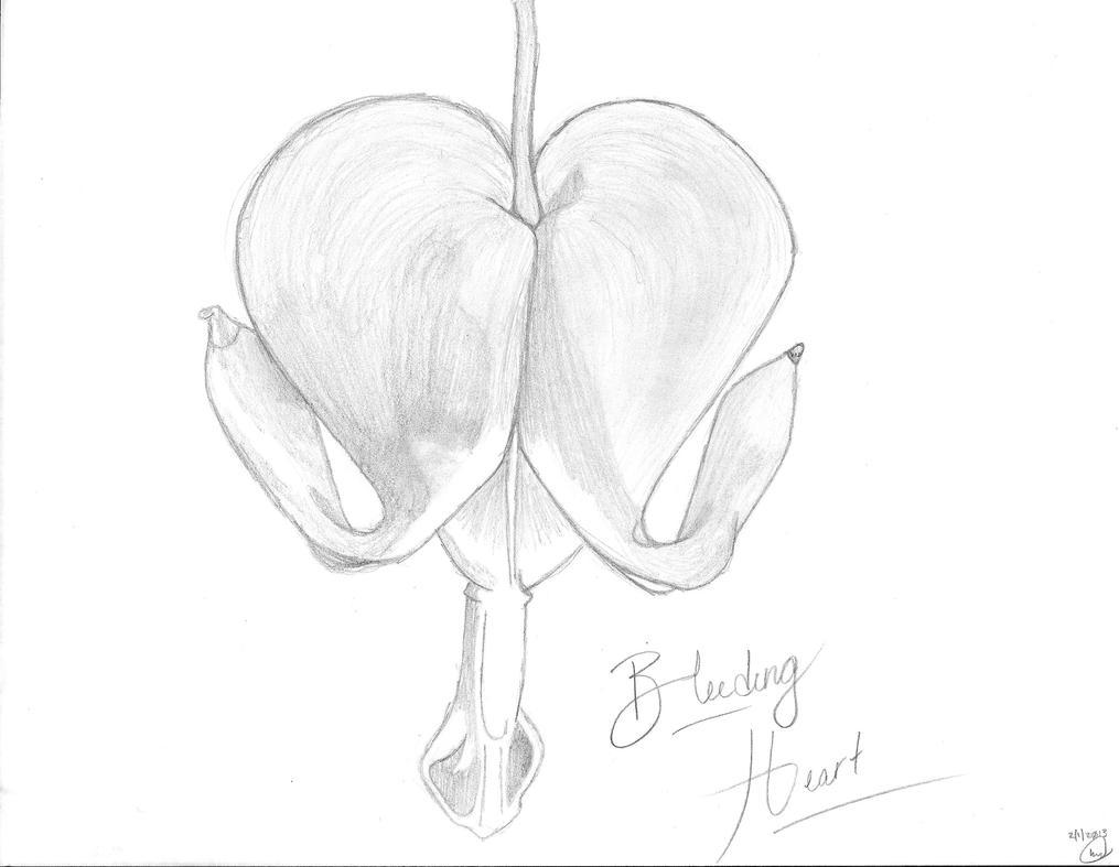 Bleeding Heart Sketch Bleeding Heart by Sodatwist143
