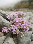Flowers in the stones