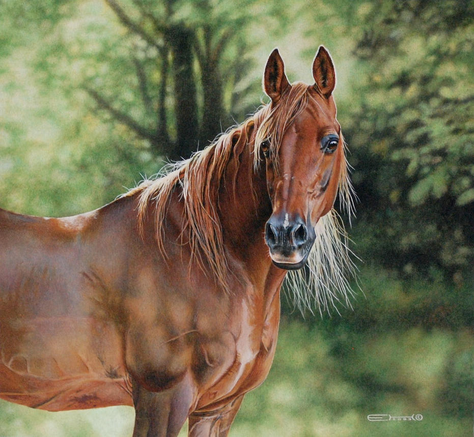 Arabian horse by esthervanhulsen on deviantart - Arabian horse pics ...
