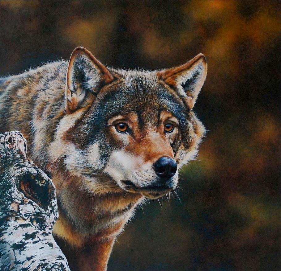 Wolf Portrait (painting) by EsthervanHulsen