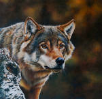 Wolf Portrait (painting)