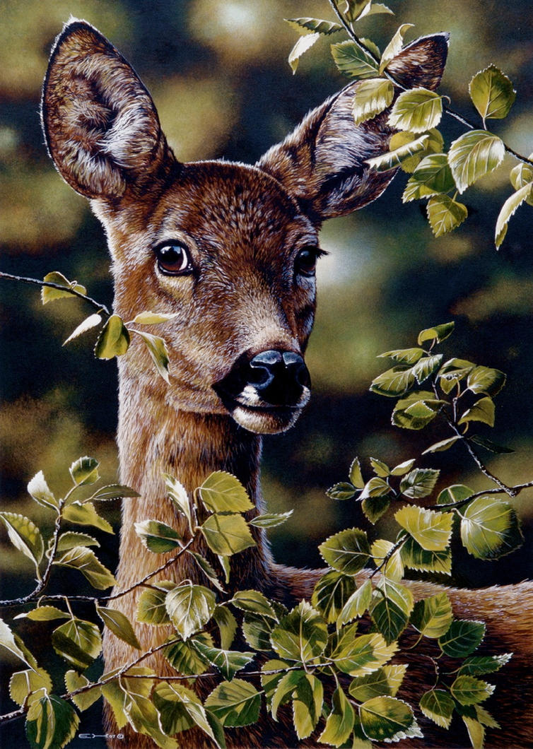 Deer Portrait by EsthervanHulsen