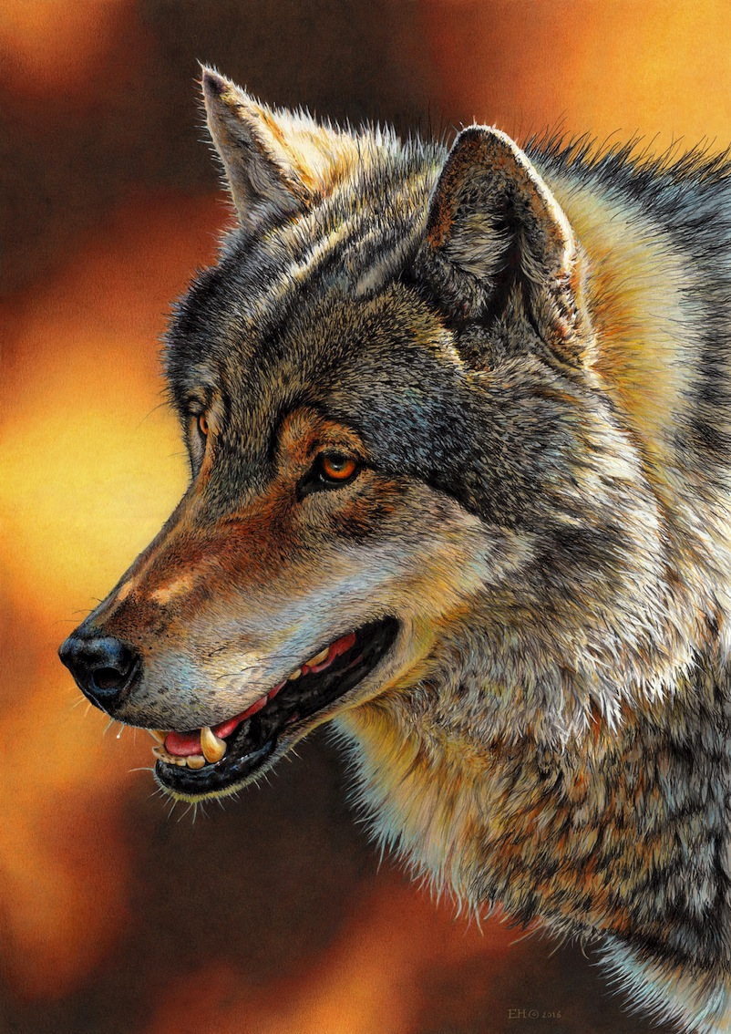 Drawing of a Wolf by EsthervanHulsen