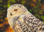 Painting of a Snowy Owl