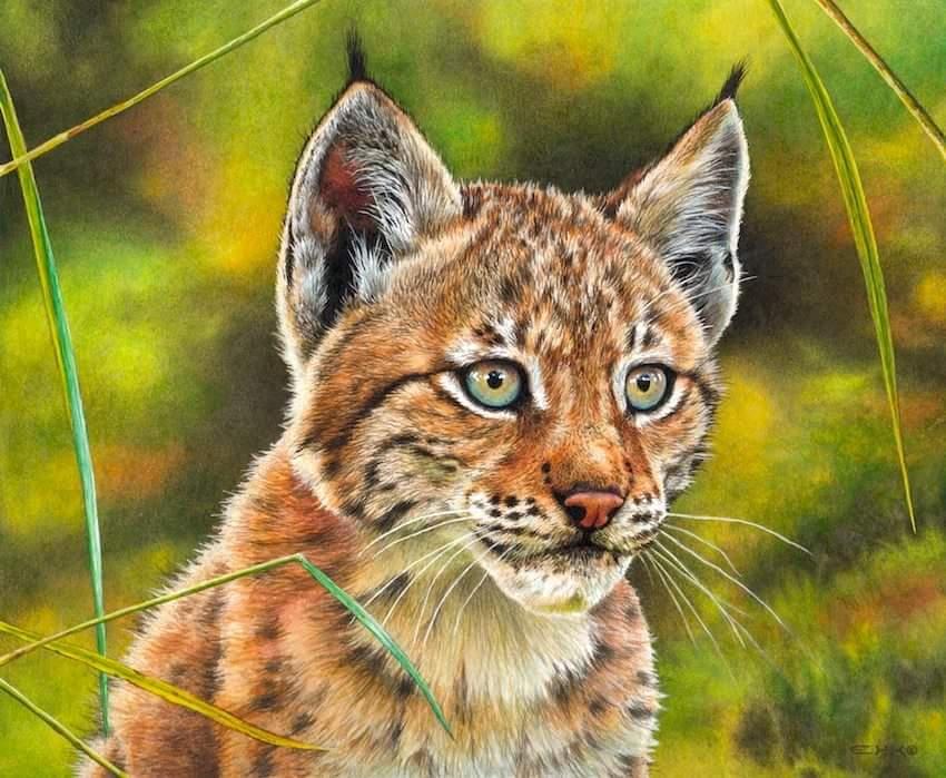 Lynx Cub painting