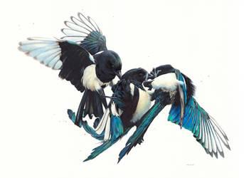 Drawing of Magpies