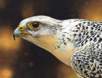 Gyrfalcon painting by EsthervanHulsen