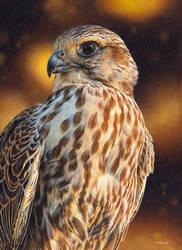 Saker Falcon Painting