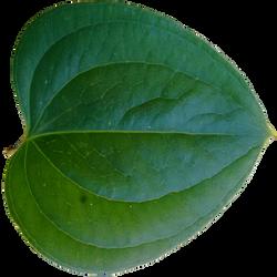 Leaf by kernill