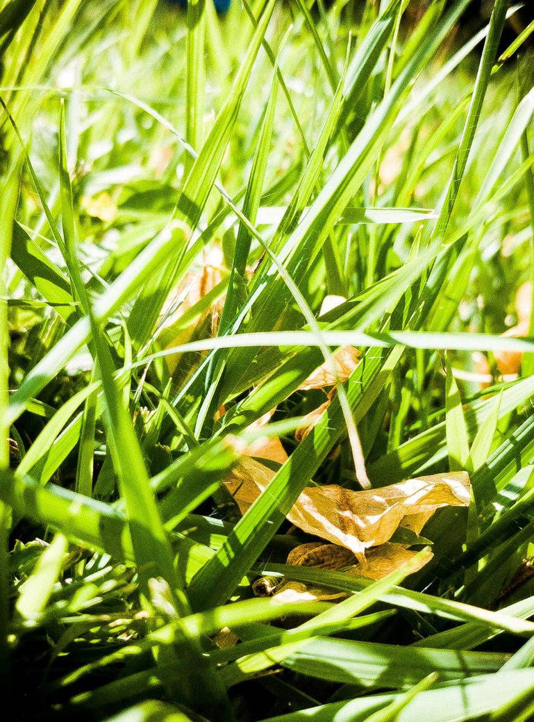 grass close by kernill