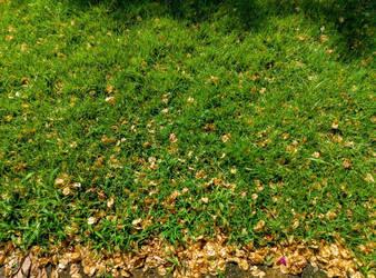 grass by kernill