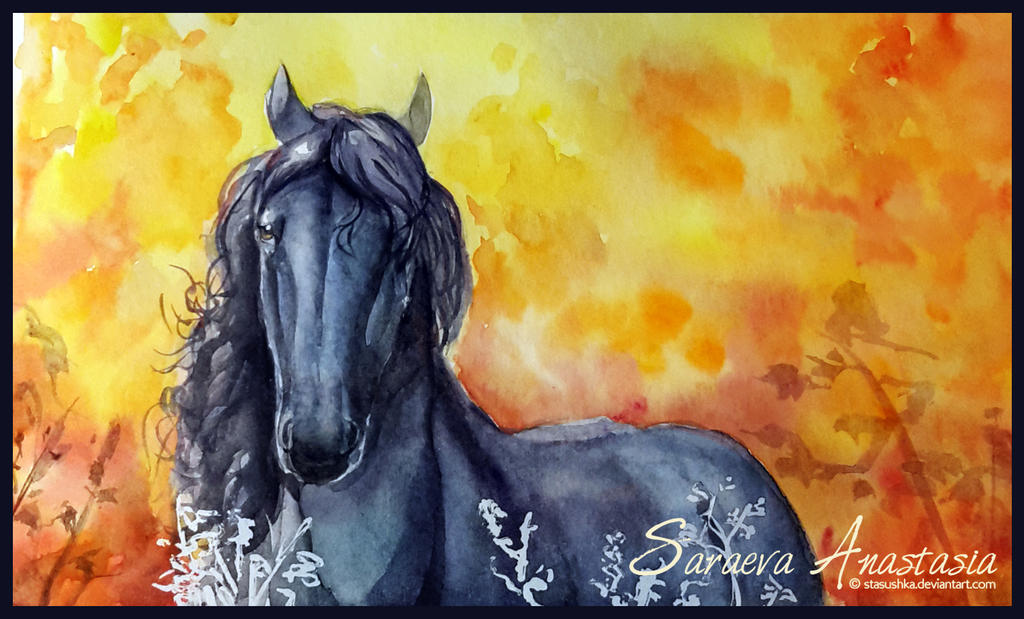 27/365 Gorgeous Friesian by Stasushka
