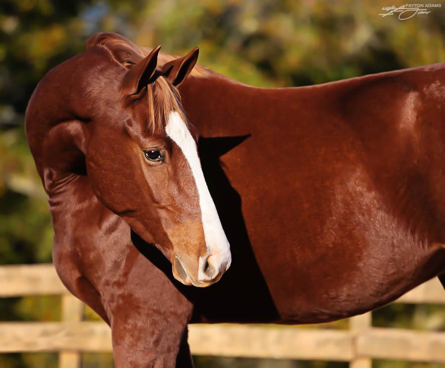 Horse I by PaytonAdams1