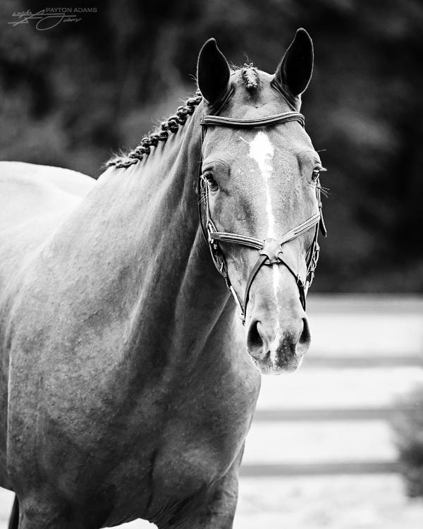 Holsteiner Approvals II by PaytonAdams1