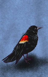 Daily Sketch: Bird with Red Shoulders by Hunchy