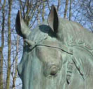 Duamuteffe's Profile Picture