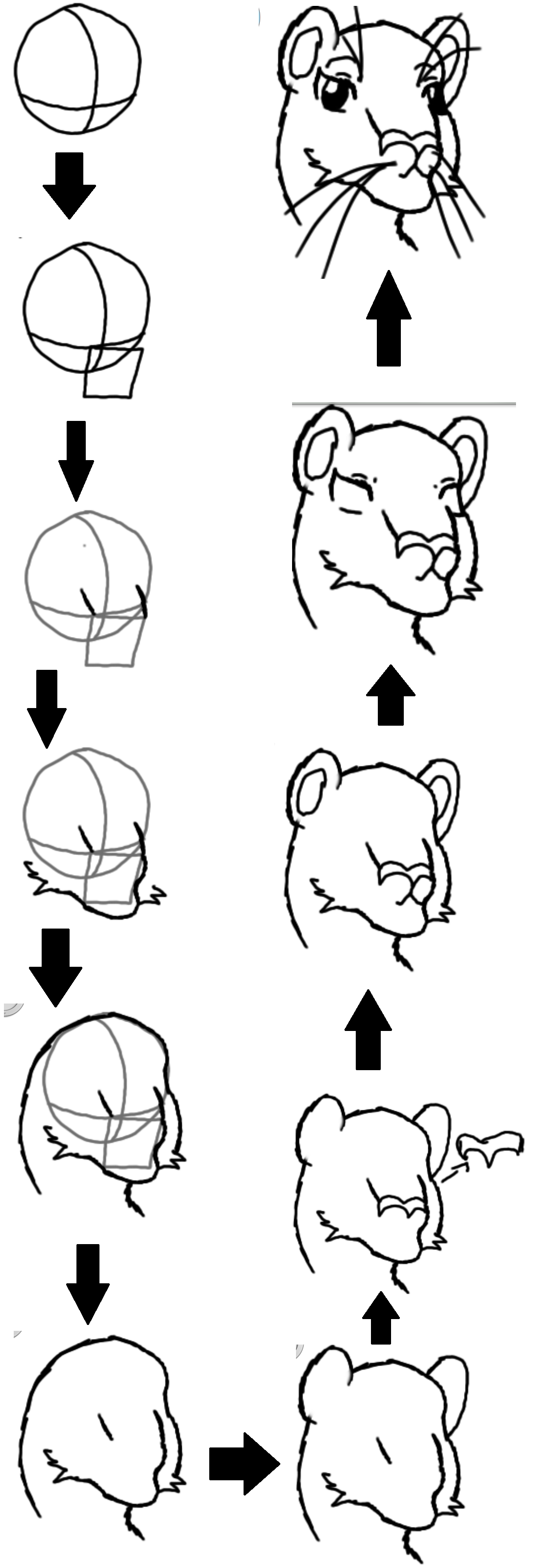 how to draw a lion head by theanimecat10 on deviantart