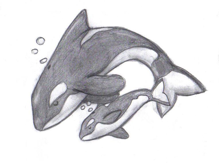 cute baby whale drawings