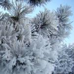 Freezing Day by bojar