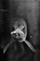 'dat fish by Lowenaaa
