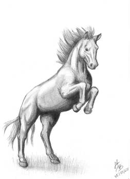 Horse: Because I fell free