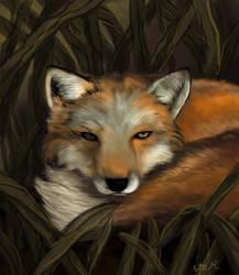 Fox by RestillHabb