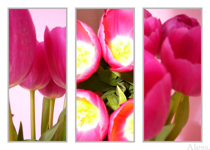Tulpen by Aless1984