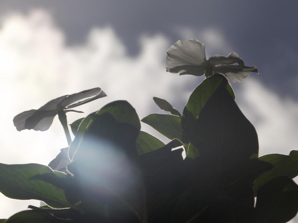 Basking in sunlight by AnEndeavorer