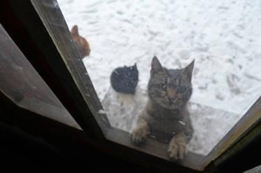 cat on the window by Rakun94