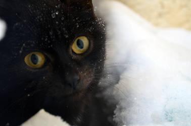 cat by Rakun94