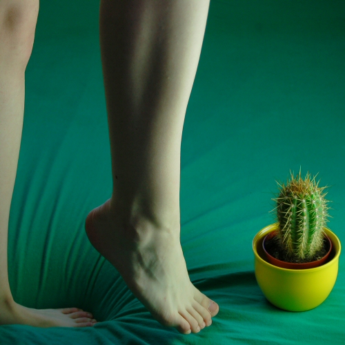 kaktus. by perfectless