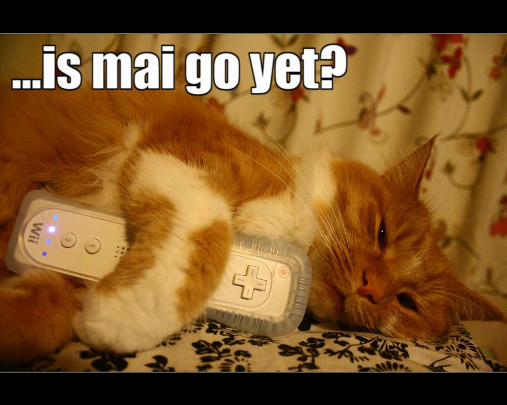 LOLcat. by XerxesXS