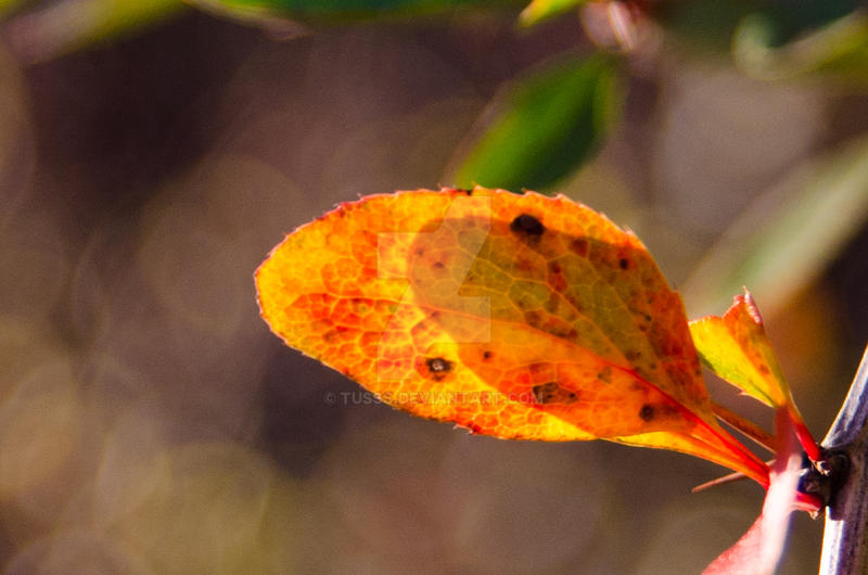 Autumn Orange by tusss
