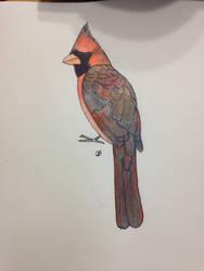 Cardinal by Shirekat