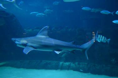 aquarium 21 by januarystock