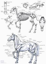 Inktober2016 - Horse Anatomy Study