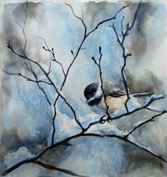 Black capped chickadee in winter by diana-0421