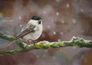 Willow tit by diana-0421