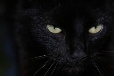 Dark as Midnight by druid69