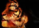 Tiger Girl 04