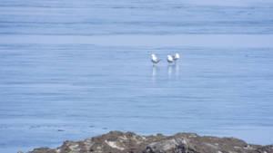 Seagulls on the Frozen Lake by Bestestcat