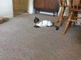 Awaiting the Kitten by Bestestcat