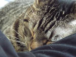 Sleepy Lewis
